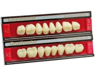 10-DENTI GNATHOSTAR A-D POST INF